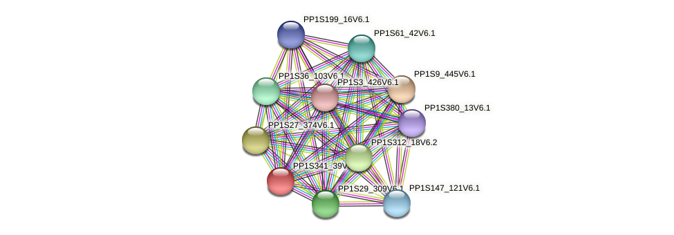 PP1S341_39V6.1 protein (Physcomitrella patens) - STRING interaction network