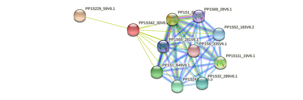 PP1S342_30V6.1 protein (Physcomitrella patens) - STRING interaction network