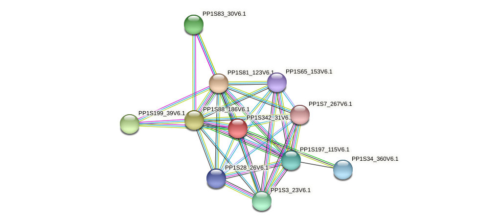 PP1S342_31V6.1 protein (Physcomitrella patens) - STRING interaction network