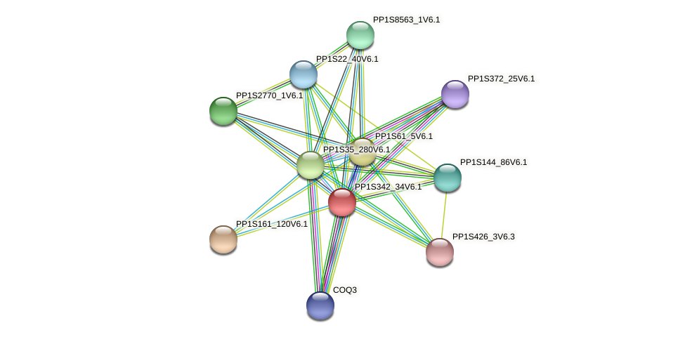 PP1S342_34V6.1 protein (Physcomitrella patens) - STRING interaction network