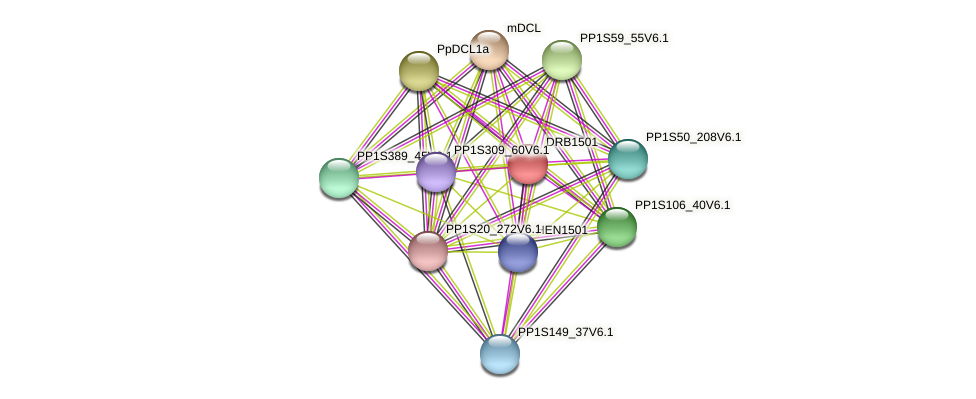 DRB1501 protein (Physcomitrella patens) - STRING interaction network