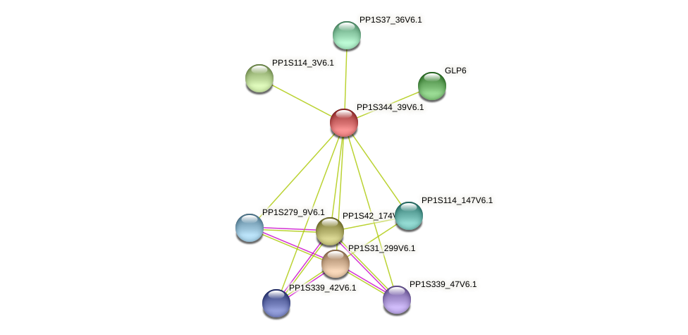 PP1S344_39V6.1 protein (Physcomitrella patens) - STRING interaction network