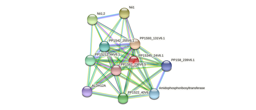PP1S345_24V6.1 protein (Physcomitrella patens) - STRING interaction network
