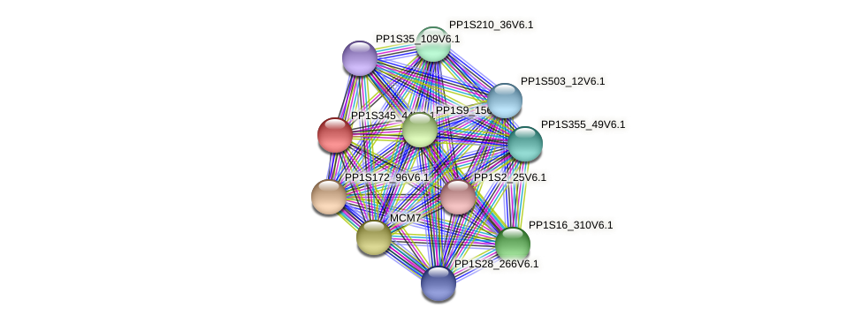 PP1S345_44V6.1 protein (Physcomitrella patens) - STRING interaction network
