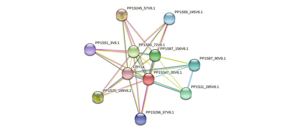PP1S347_35V6.1 protein (Physcomitrella patens) - STRING interaction network