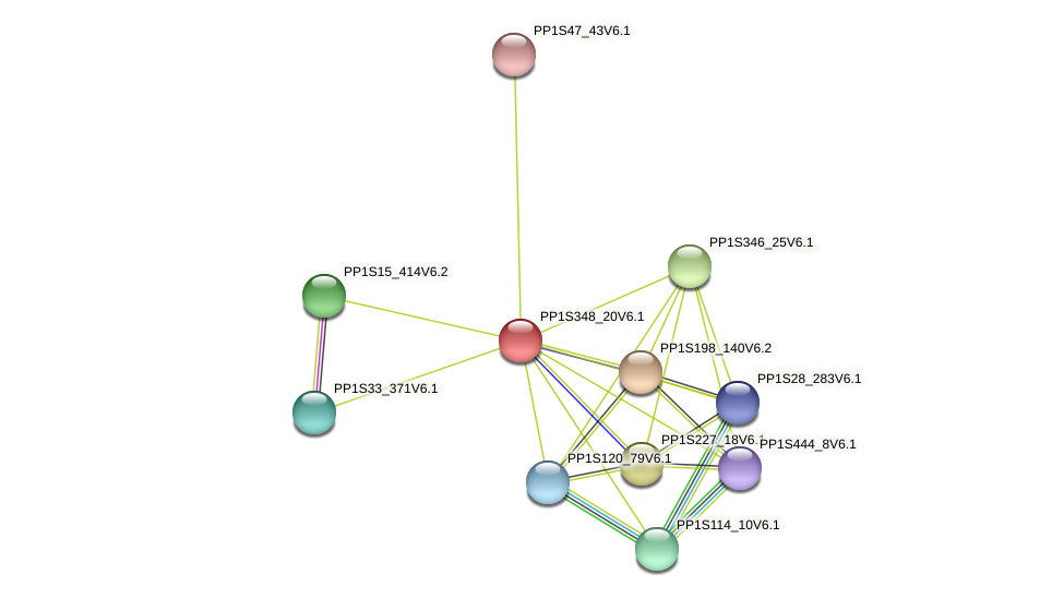 PP1S348_20V6.1 protein (Physcomitrella patens) - STRING interaction network