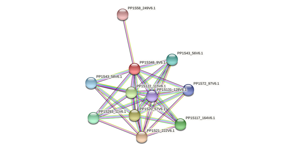 PP1S348_9V6.1 protein (Physcomitrella patens) - STRING interaction network