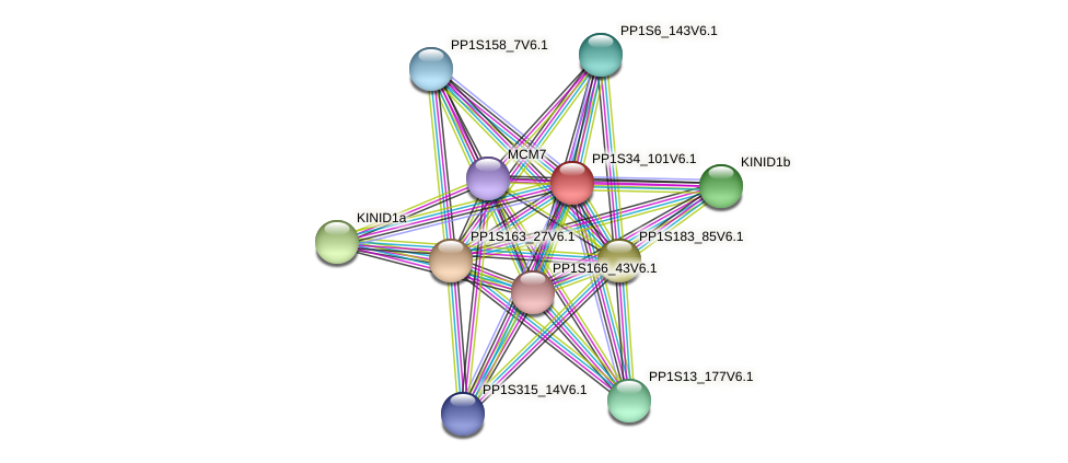 PP1S34_101V6.1 protein (Physcomitrella patens) - STRING interaction network