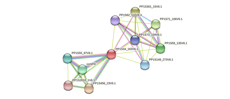 PP1S34_163V6.1 protein (Physcomitrella patens) - STRING interaction network