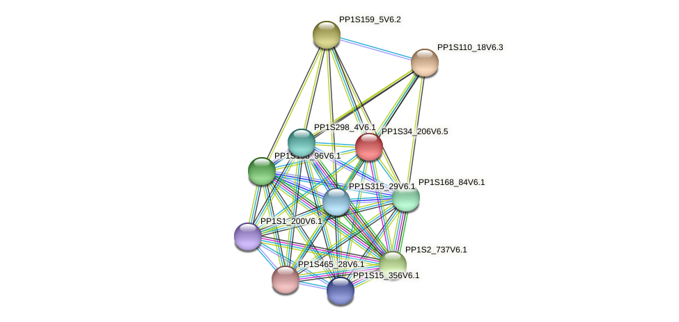 PP1S34_206V6.1 protein (Physcomitrella patens) - STRING interaction network