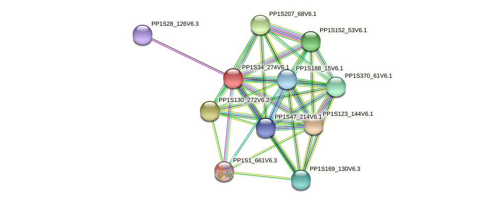 PP1S34_274V6.1 protein (Physcomitrella patens) - STRING interaction network