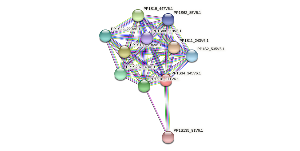 PP1S34_345V6.1 protein (Physcomitrella patens) - STRING interaction network