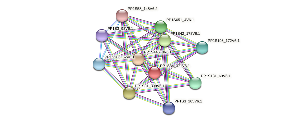 PP1S34_371V6.1 protein (Physcomitrella patens) - STRING interaction network