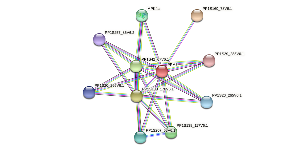 PPM3 protein (Physcomitrella patens) - STRING interaction network