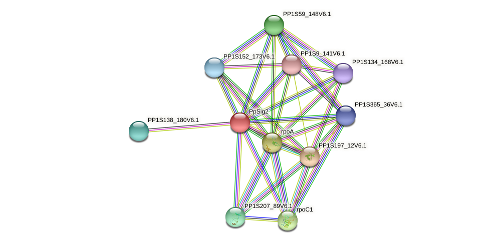 PpSig2 protein (Physcomitrella patens) - STRING interaction network