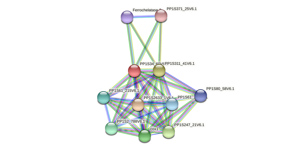 PP1S34_60V6.1 protein (Physcomitrella patens) - STRING interaction network