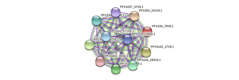 PP1S34_79V6.1 protein (Physcomitrella patens) - STRING interaction network