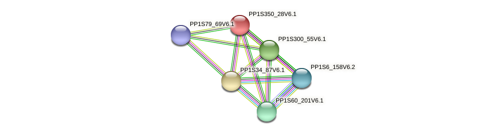 PP1S350_28V6.1 protein (Physcomitrella patens) - STRING interaction network