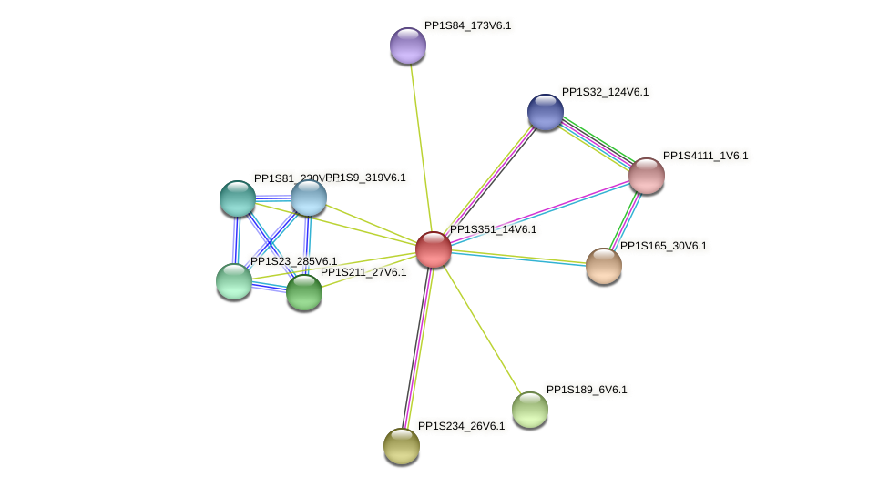 PP1S351_14V6.1 protein (Physcomitrella patens) - STRING interaction network