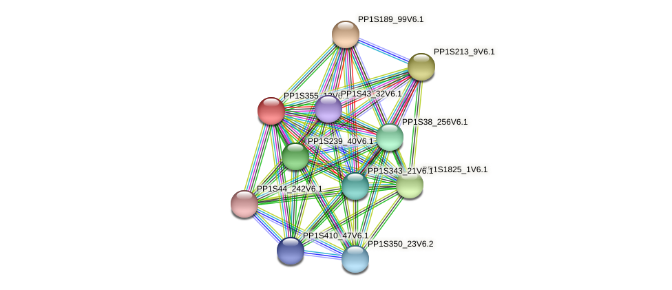 PP1S355_13V6.1 protein (Physcomitrella patens) - STRING interaction network