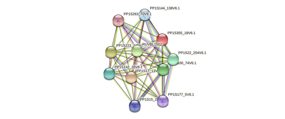 PP1S355_18V6.1 protein (Physcomitrella patens) - STRING interaction network