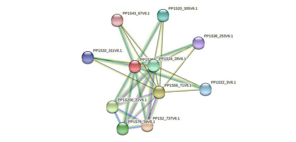 PP1S356_35V6.1 protein (Physcomitrella patens) - STRING interaction network