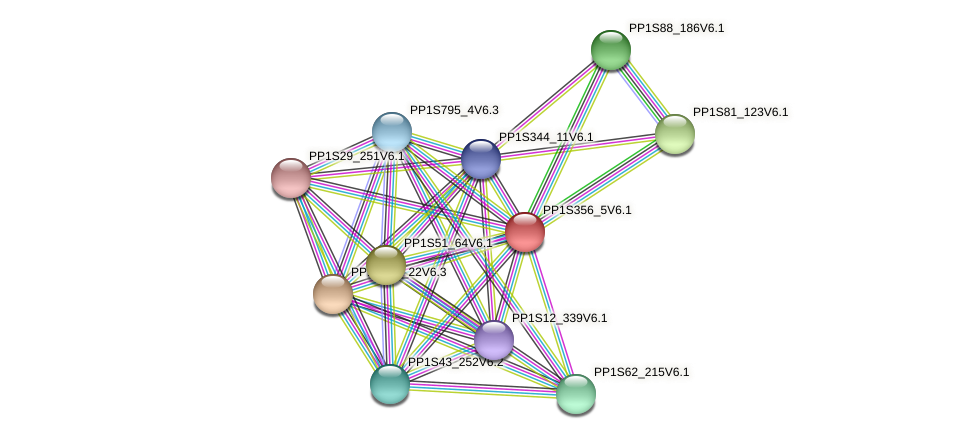 PP1S356_5V6.1 protein (Physcomitrella patens) - STRING interaction network
