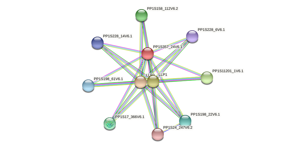 PP1S357_24V6.1 protein (Physcomitrella patens) - STRING interaction network