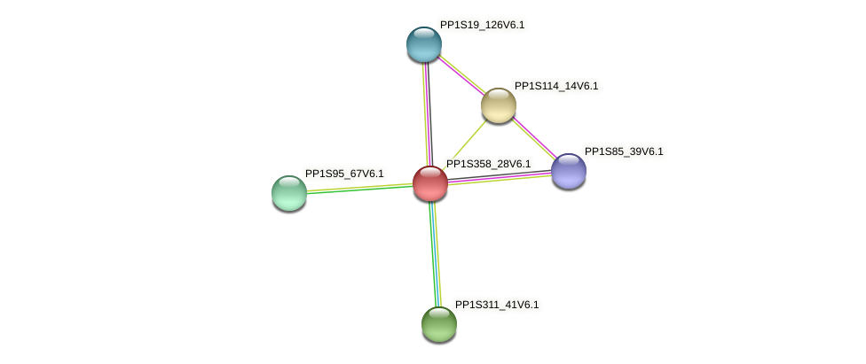 PP1S358_28V6.1 protein (Physcomitrella patens) - STRING interaction network