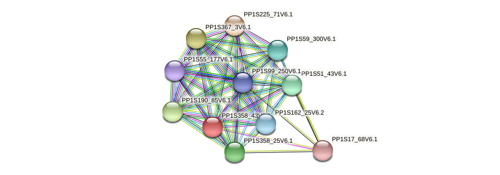 PP1S358_43V6.1 protein (Physcomitrella patens) - STRING interaction network