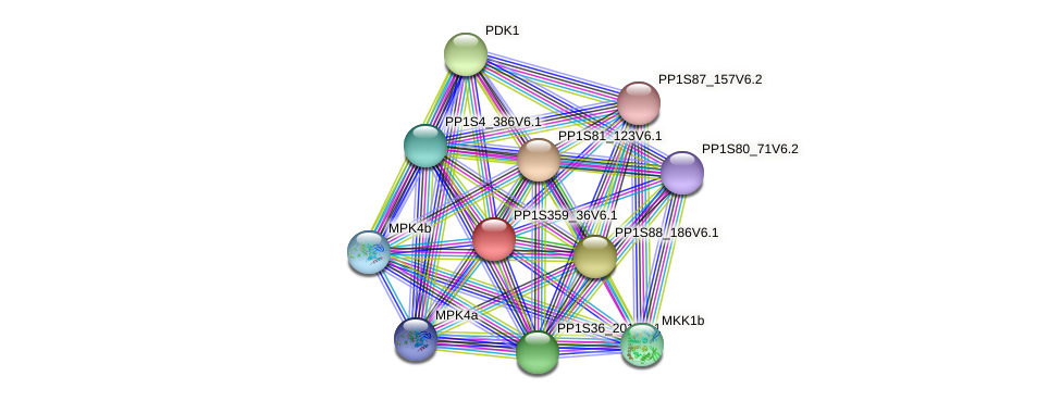 PP1S359_36V6.1 protein (Physcomitrella patens) - STRING interaction network
