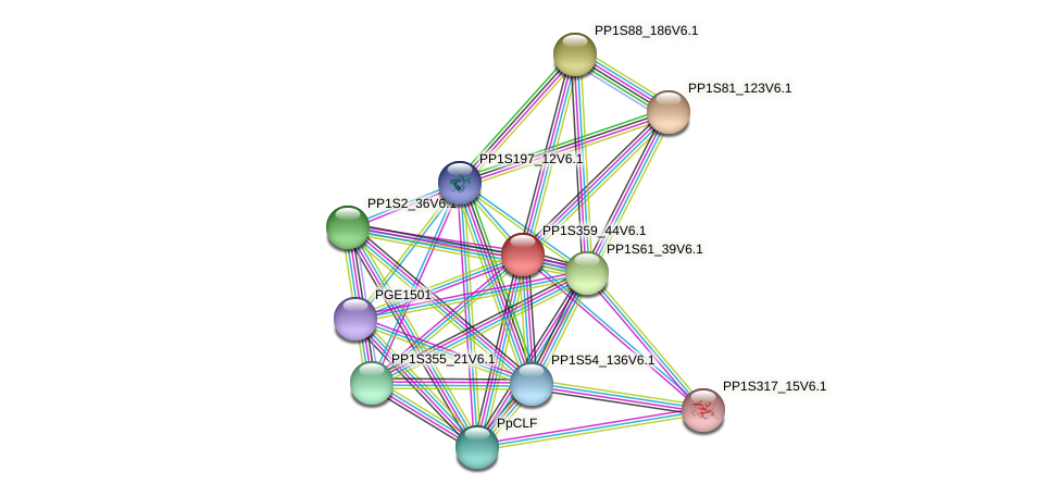 PP1S359_44V6.1 protein (Physcomitrella patens) - STRING interaction network