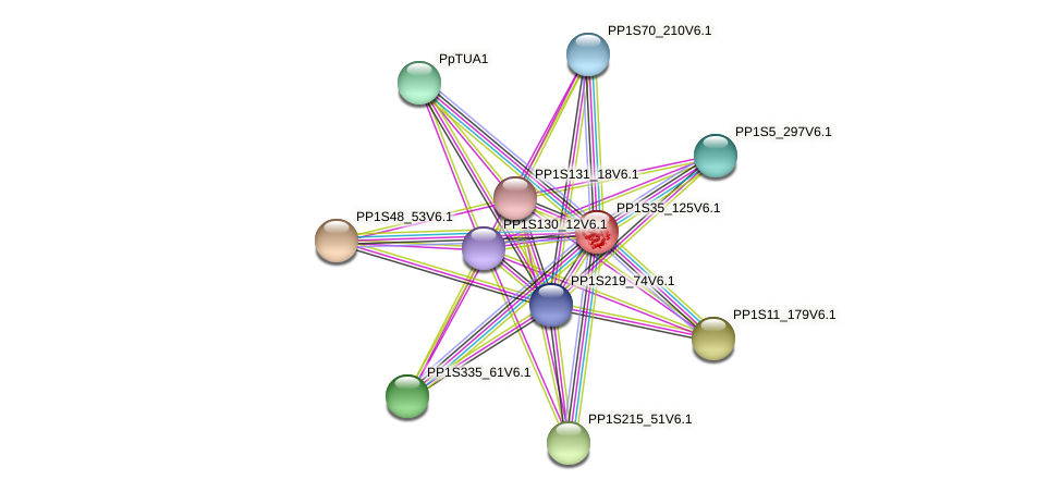 PP1S35_125V6.1 protein (Physcomitrella patens) - STRING interaction network