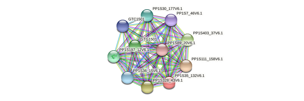 PP1S35_132V6.1 protein (Physcomitrella patens) - STRING interaction network