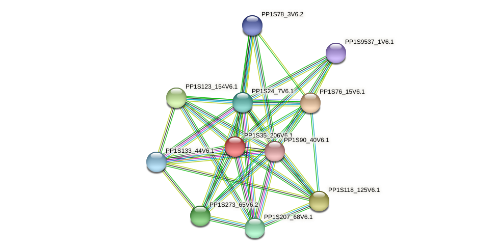 PP1S35_206V6.1 protein (Physcomitrella patens) - STRING interaction network