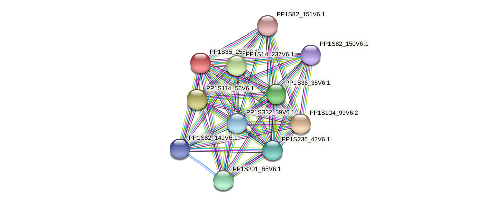 PP1S35_255V6.1 protein (Physcomitrella patens) - STRING interaction network