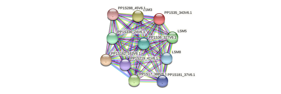PP1S35_343V6.1 protein (Physcomitrella patens) - STRING interaction network