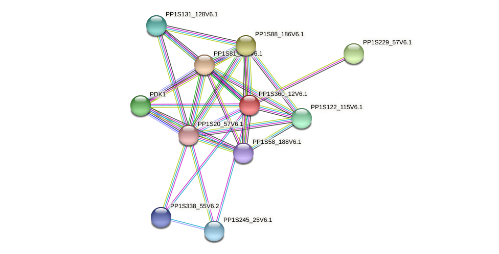 PP1S360_12V6.1 protein (Physcomitrella patens) - STRING interaction network