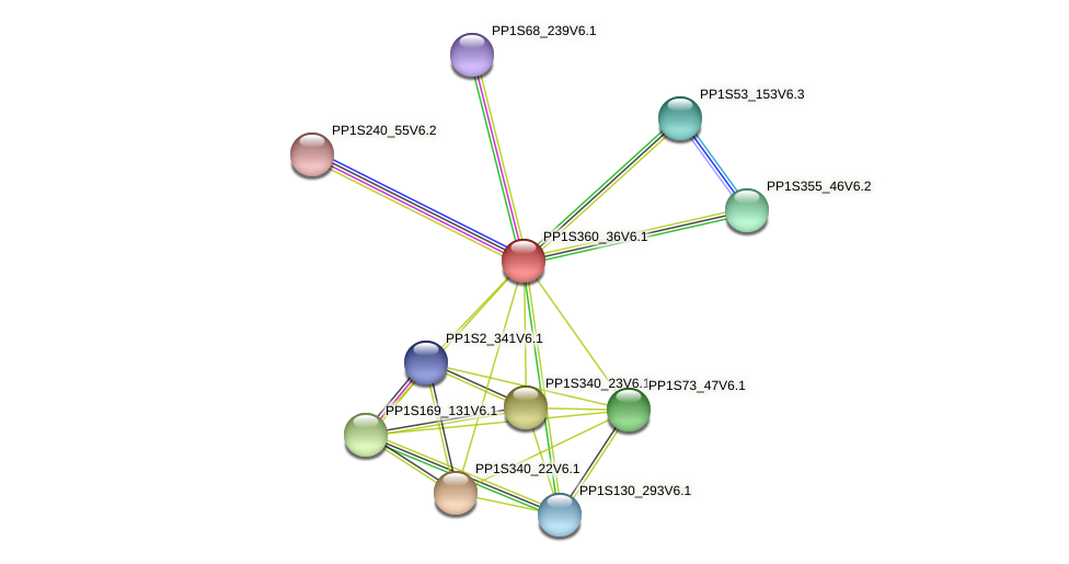 PP1S360_36V6.1 protein (Physcomitrella patens) - STRING interaction network
