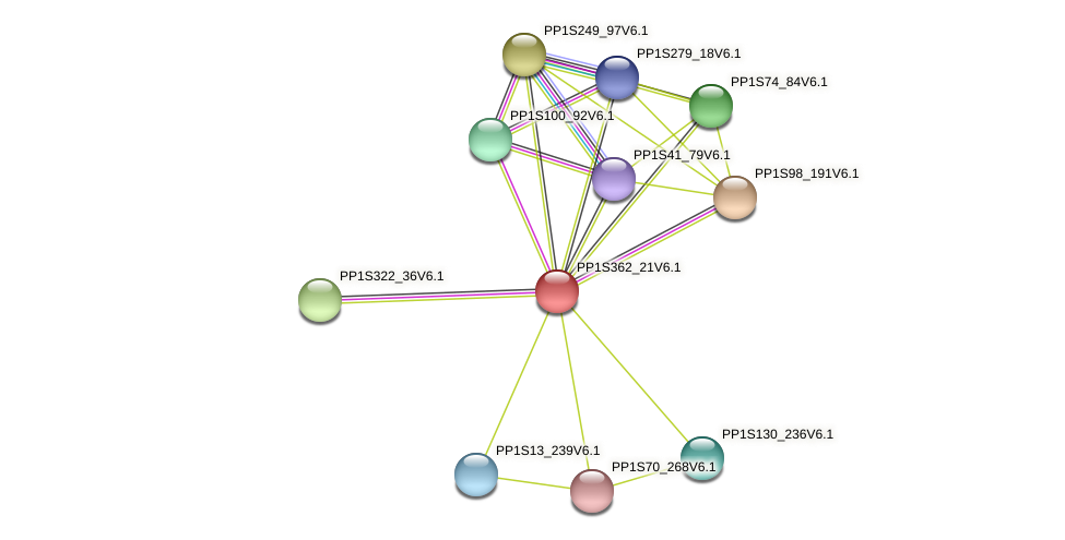PP1S362_21V6.1 protein (Physcomitrella patens) - STRING interaction network