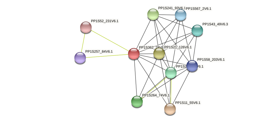 PP1S362_28V6.1 protein (Physcomitrella patens) - STRING interaction network