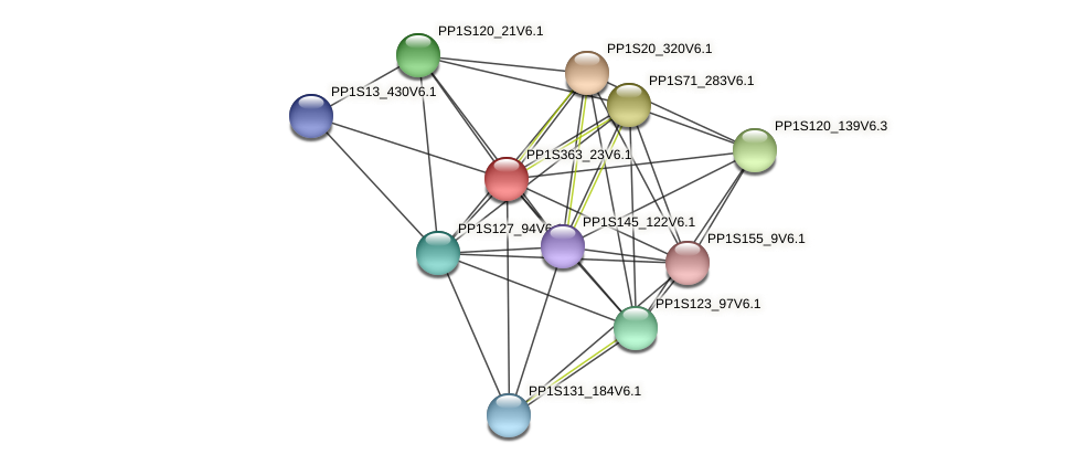 PP1S363_23V6.1 protein (Physcomitrella patens) - STRING interaction network