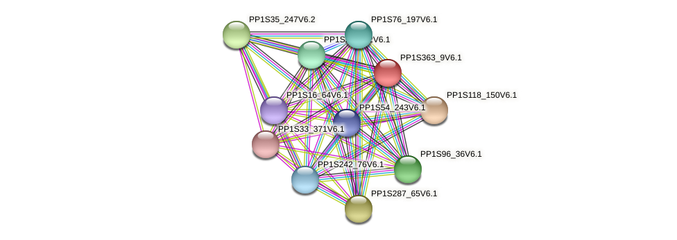 PP1S363_9V6.1 protein (Physcomitrella patens) - STRING interaction network