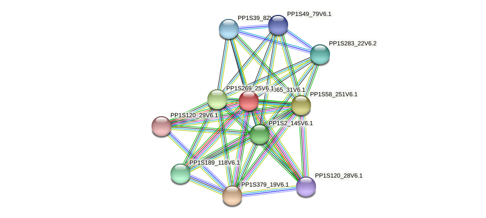 PP1S365_31V6.1 protein (Physcomitrella patens) - STRING interaction network