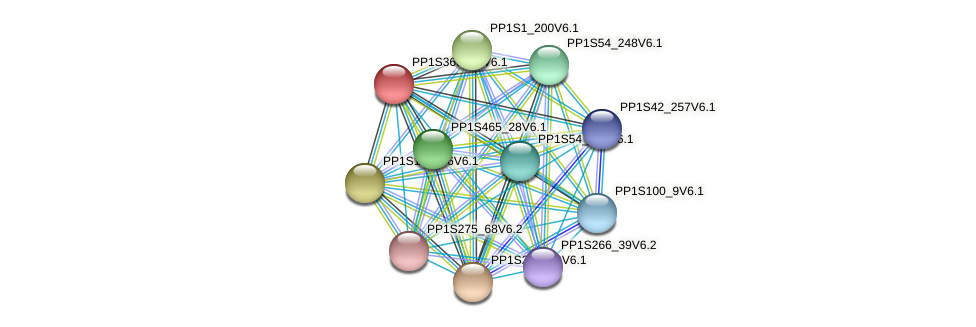 PP1S366_10V6.1 protein (Physcomitrella patens) - STRING interaction network