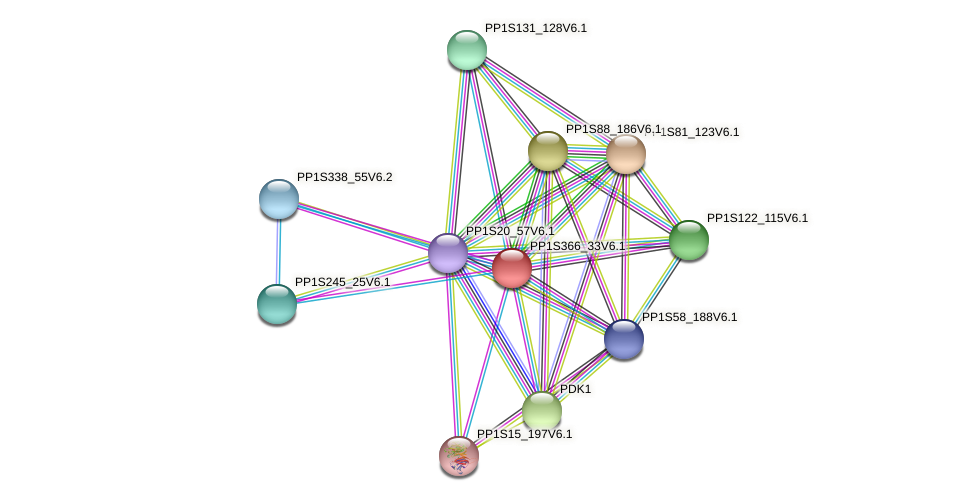 PP1S366_33V6.1 protein (Physcomitrella patens) - STRING interaction network