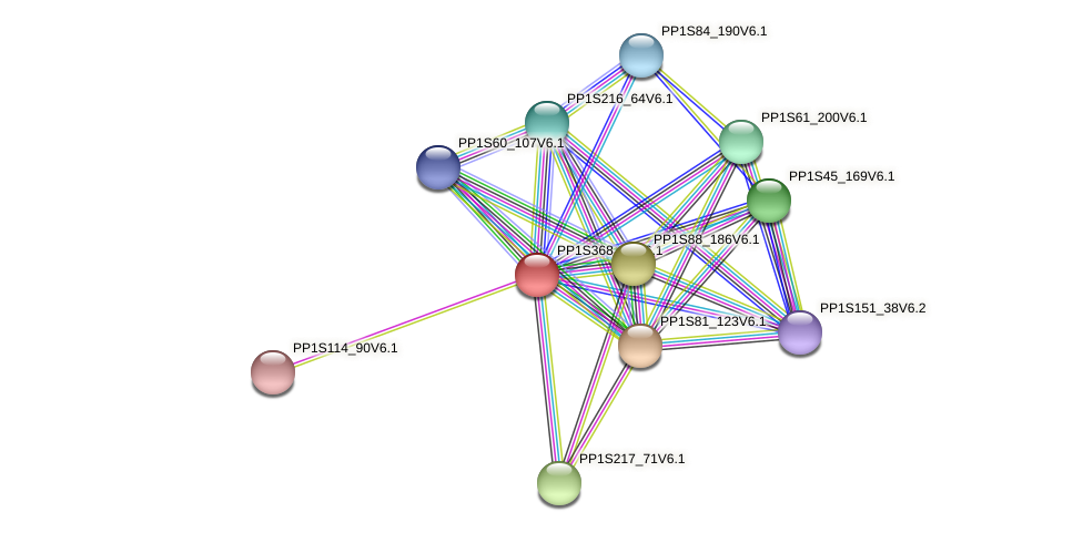 PP1S368_13V6.1 protein (Physcomitrella patens) - STRING interaction network
