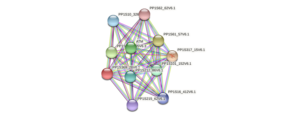 PP1S369_26V6.1 protein (Physcomitrella patens) - STRING interaction network