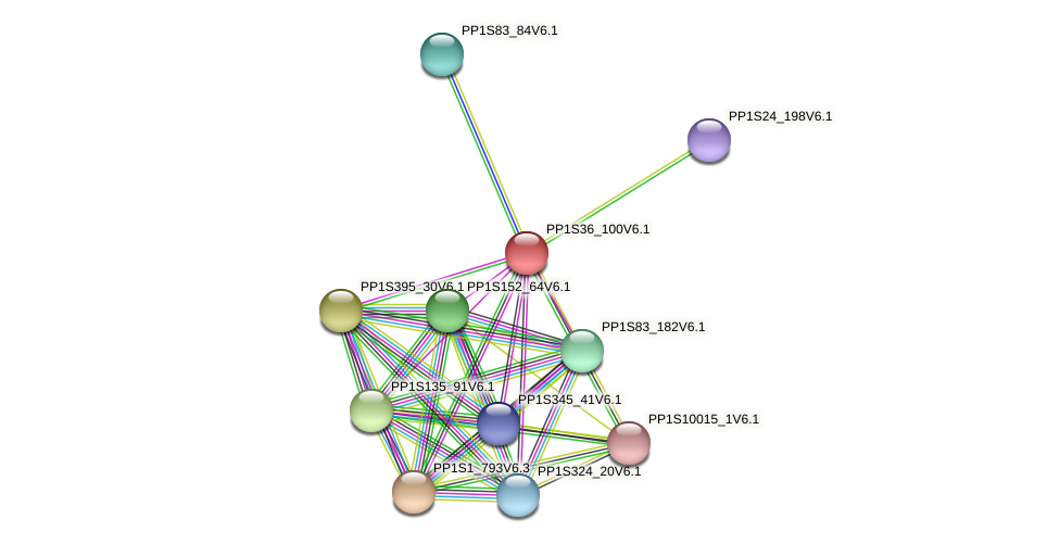 PP1S36_100V6.1 protein (Physcomitrella patens) - STRING interaction network