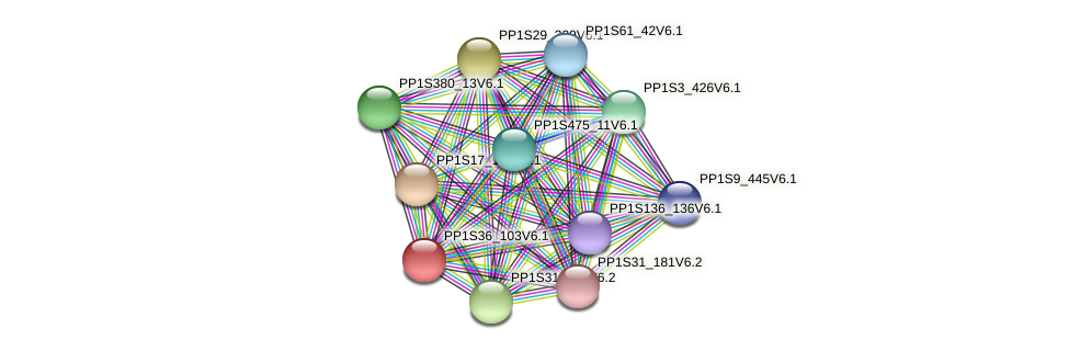 PP1S36_103V6.1 protein (Physcomitrella patens) - STRING interaction network
